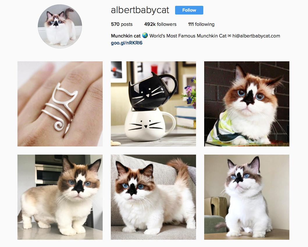 @albertbabycat favourite Instagram pets