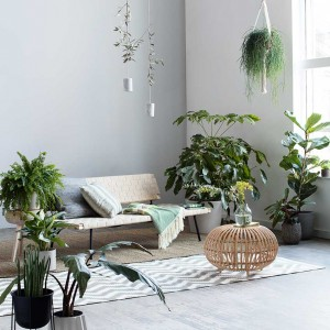 Houseplants are your wellbeing friend. Living accessories to be employed with abandon. Stylist Amanda Smith; photographer Ben Anders.