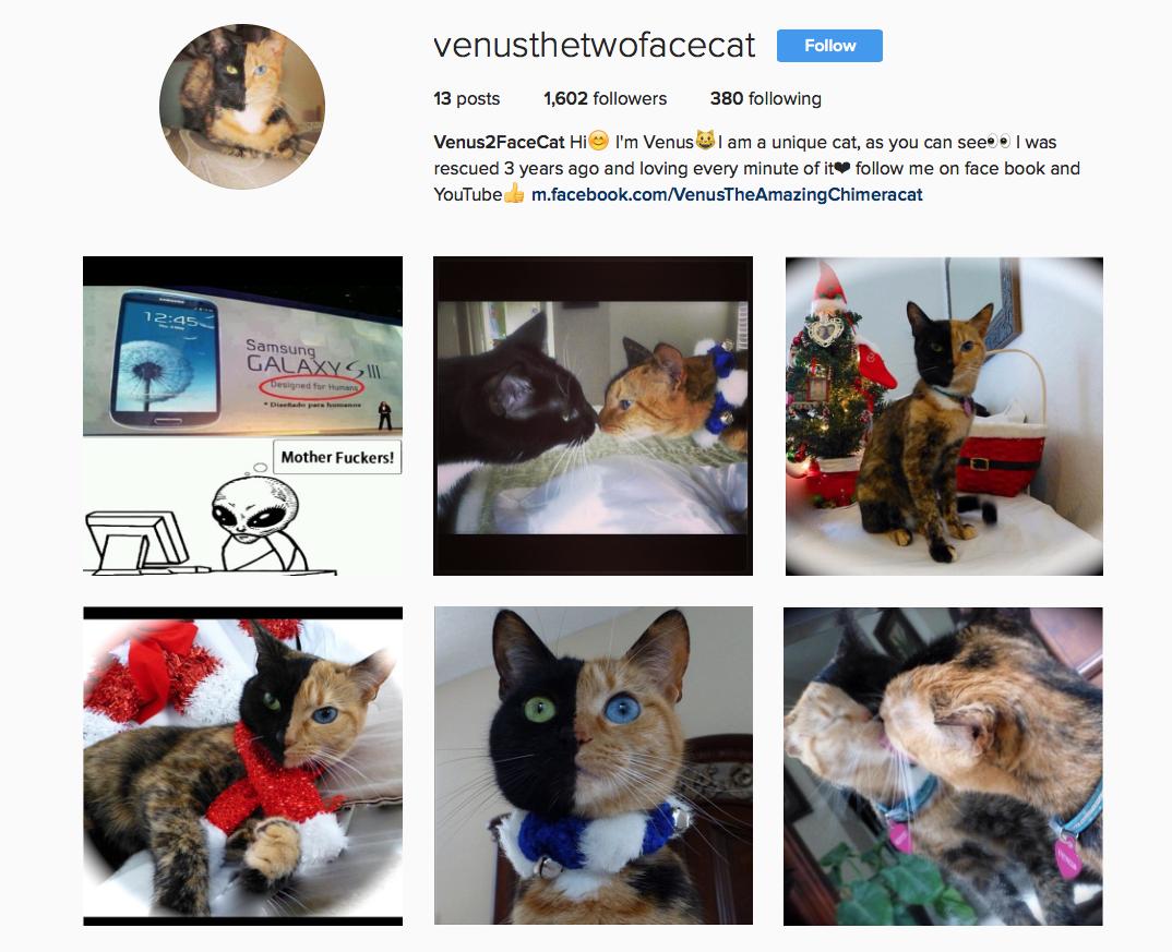 @venusthetwofacecat favourite Instagram pets