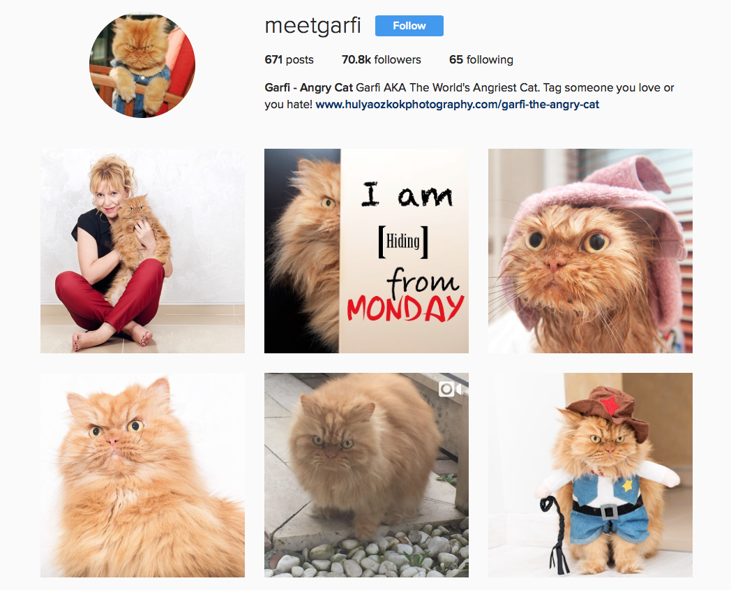 @meetgarfi favourite Instagram pets