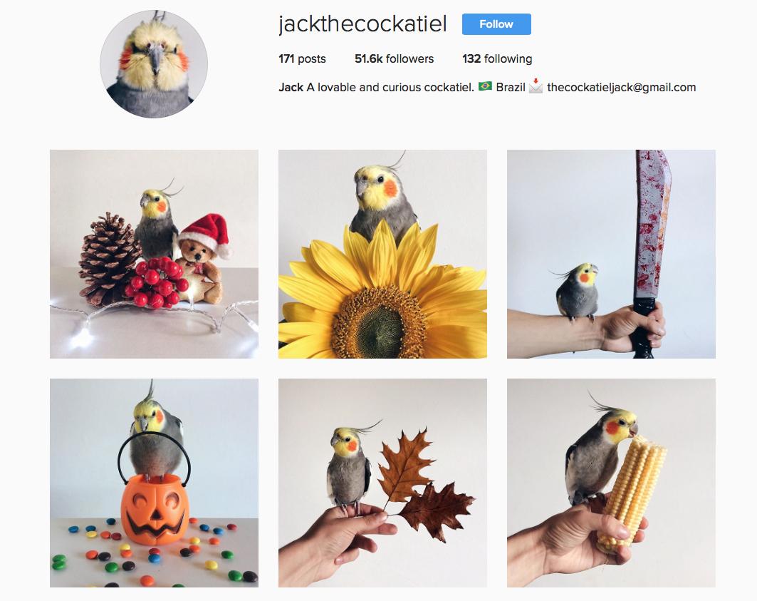 @jackthecockatiel favourite Instagram pets
