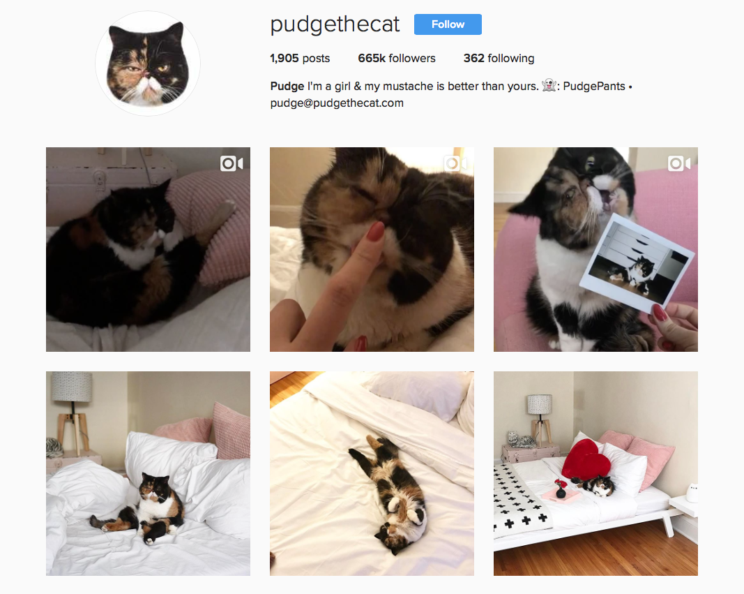 @pudgethecat favourite Instagram pets feeds to follow