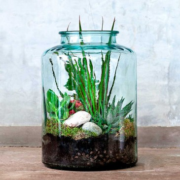 How to do terrariums
