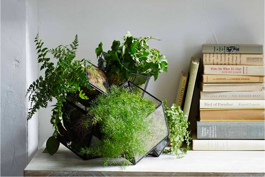 'Cube' terrarium by West Elm