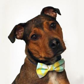 'Pastel Point' bow tie, £12, East End Best Friend
