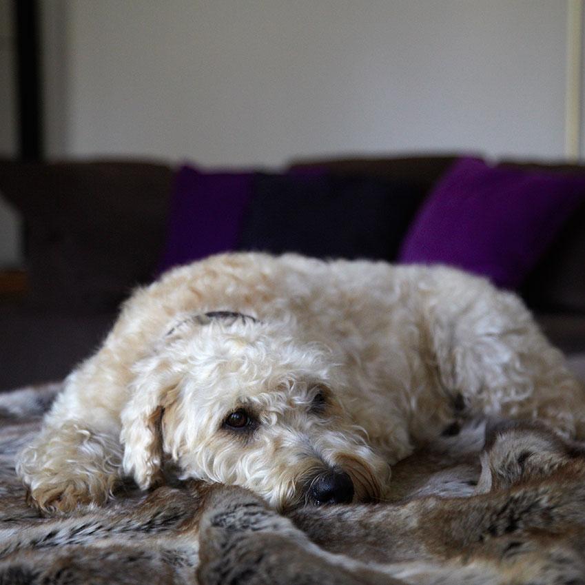 'Felpa' faux fur blanket, £43, Miacara