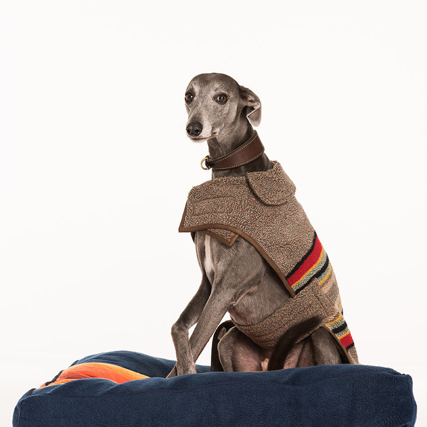 'Grand Canyon' pet bed, from £95; coat, from £48